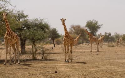 Mobilisation des zoos aux côtés de l'Union internationale pour la conservation de la nature,perspective du congrès mondial de la nature 2020.