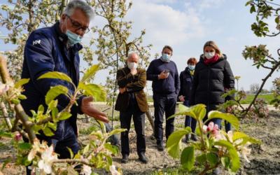 Vague de gel : une épreuve pour nos viticulteurs et arboriculteurs